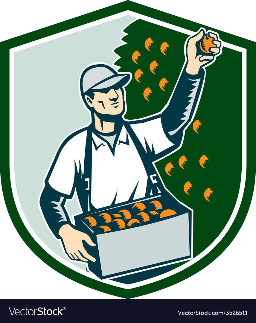 Fruit picker worker picking plum shield vector | Price: 1 Credit (USD $1)