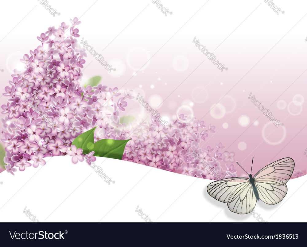 Greeting card with lilac and butterfly vector | Price: 1 Credit (USD $1)