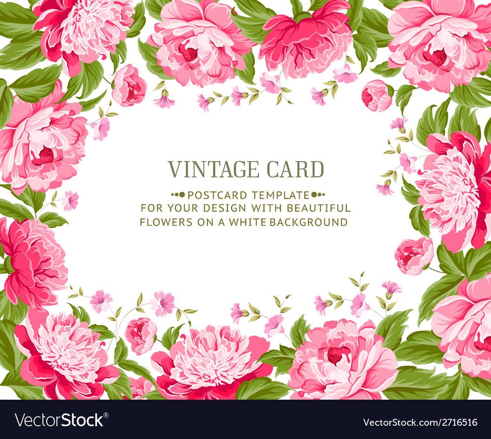 Beautiful peonies vector | Price: 1 Credit (USD $1)