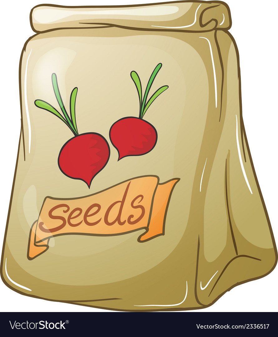 A pack of onion seeds vector | Price: 1 Credit (USD $1)
