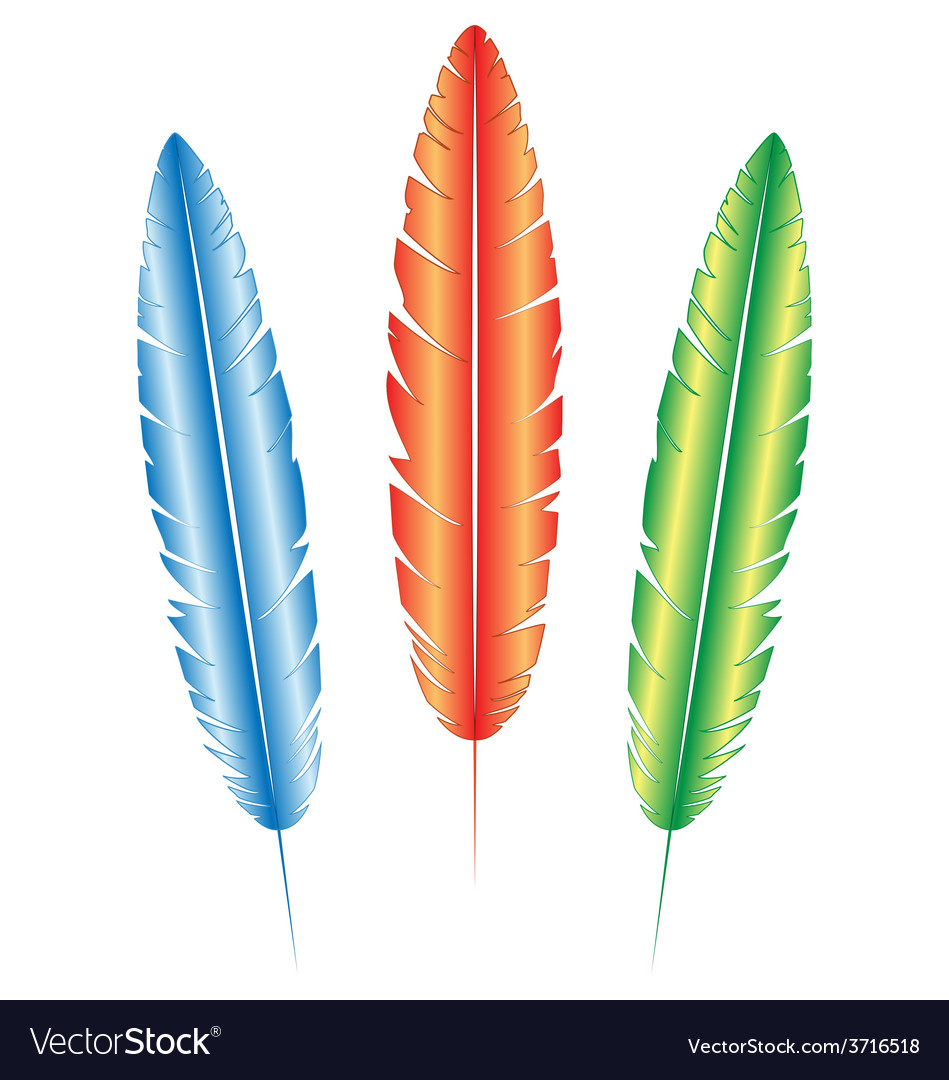 Multicolored feathers on white vector | Price: 1 Credit (USD $1)