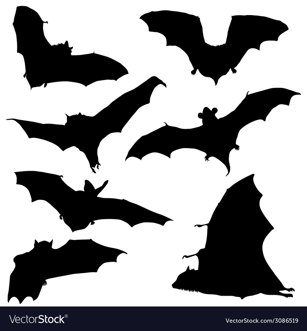 Bat black silhouette vector | Price: 1 Credit (USD $1)