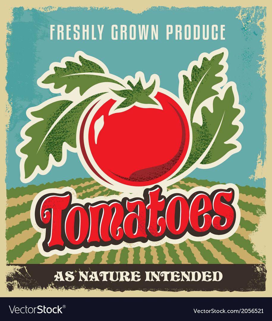Retro tomato vintage advertising poster vector | Price: 3 Credit (USD $3)
