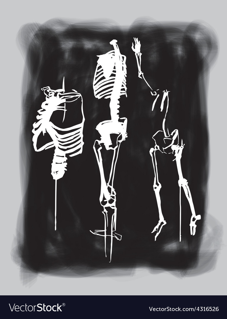Skeletons vector | Price: 1 Credit (USD $1)