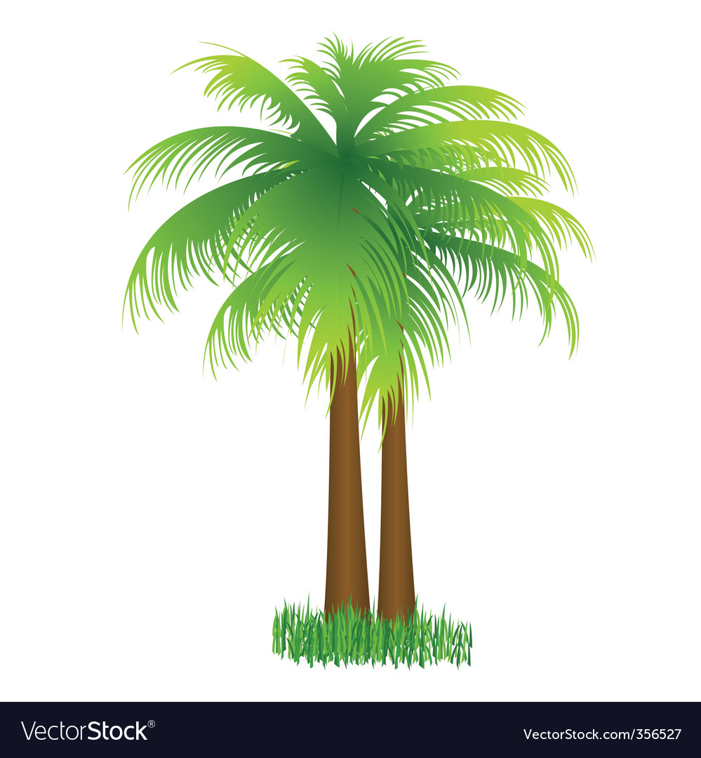Coconut tree vector | Price: 1 Credit (USD $1)