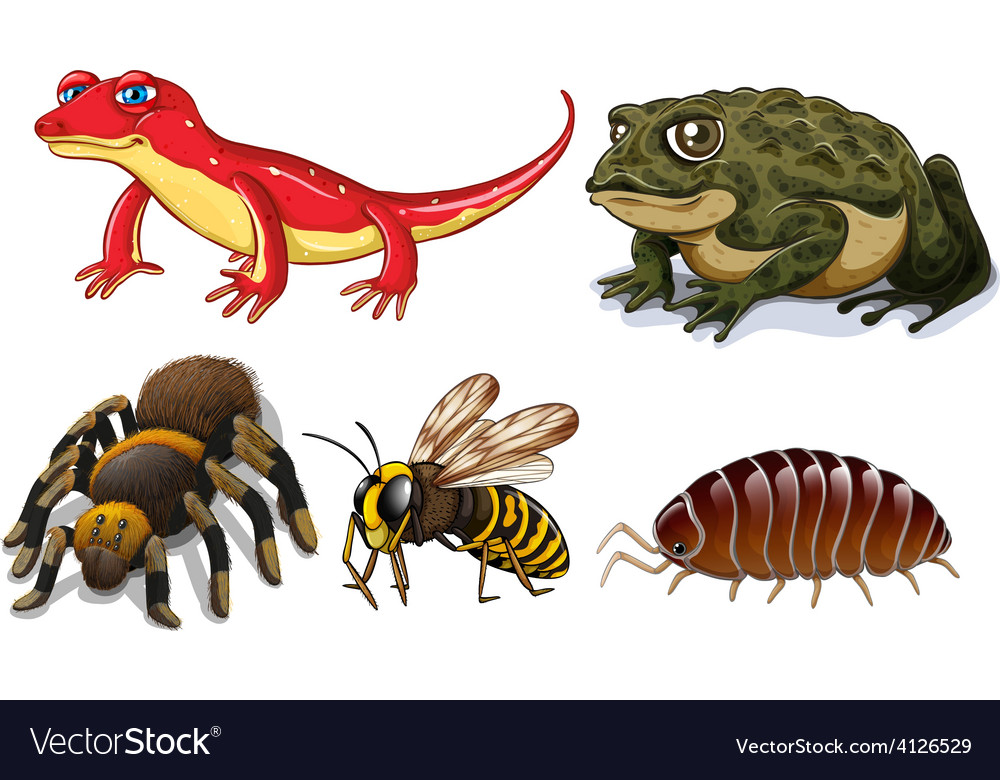 Small animals vector | Price: 1 Credit (USD $1)