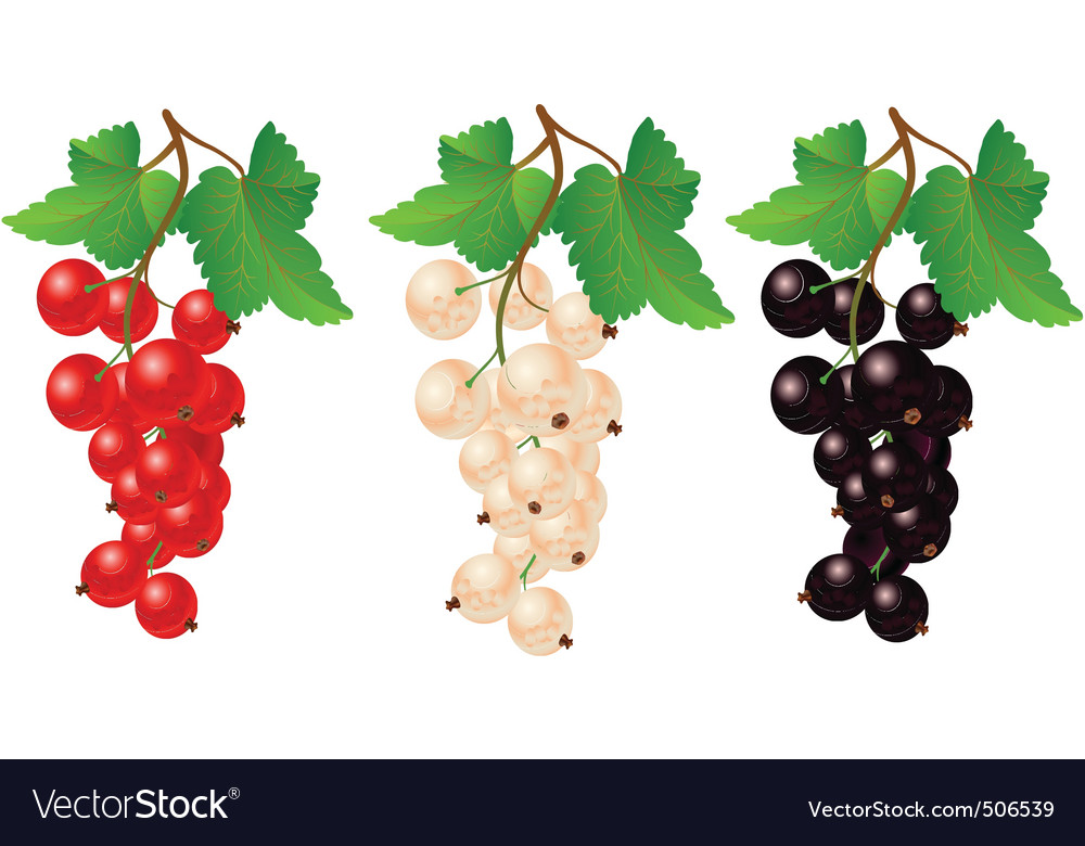 Currant red black and white on bench vector | Price: 1 Credit (USD $1)