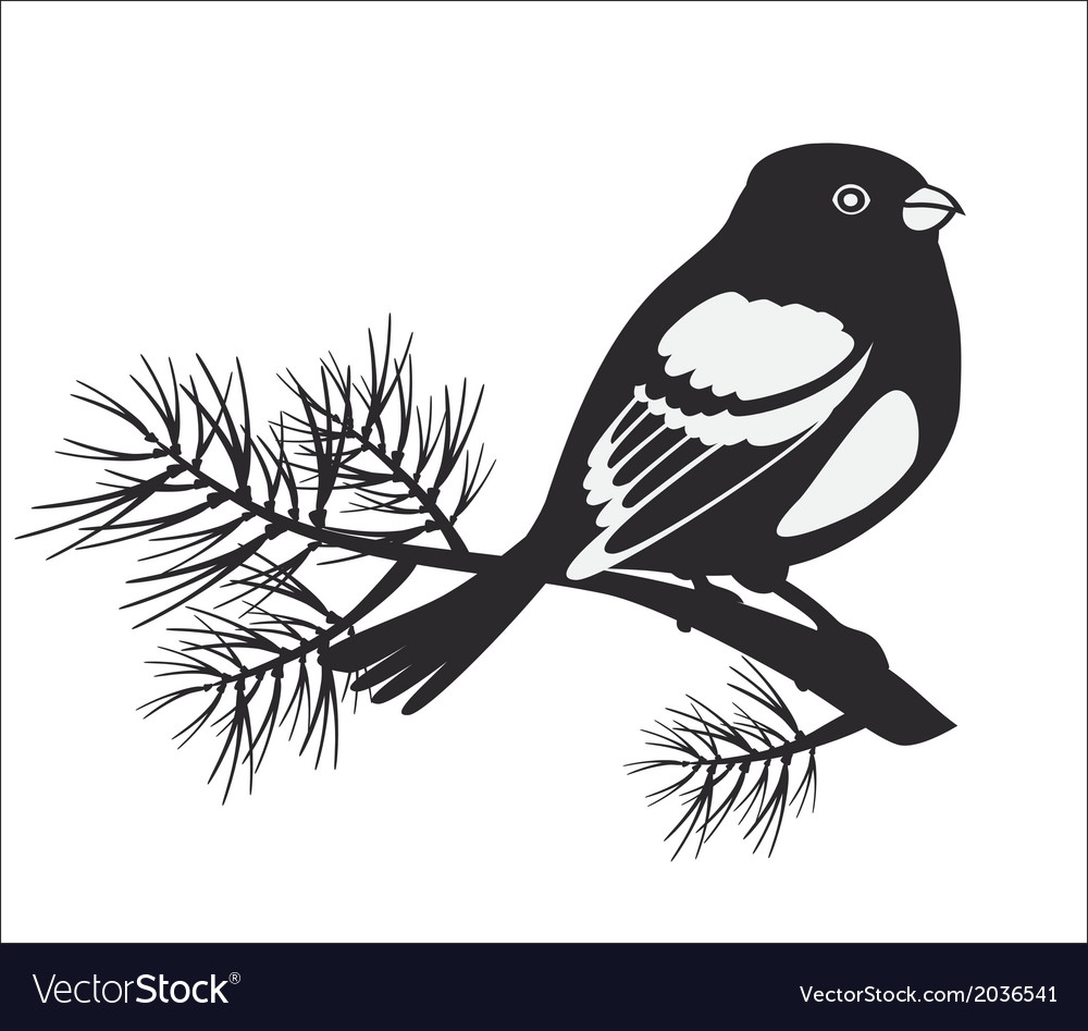 Black silhouette of bullfinch vector | Price: 1 Credit (USD $1)