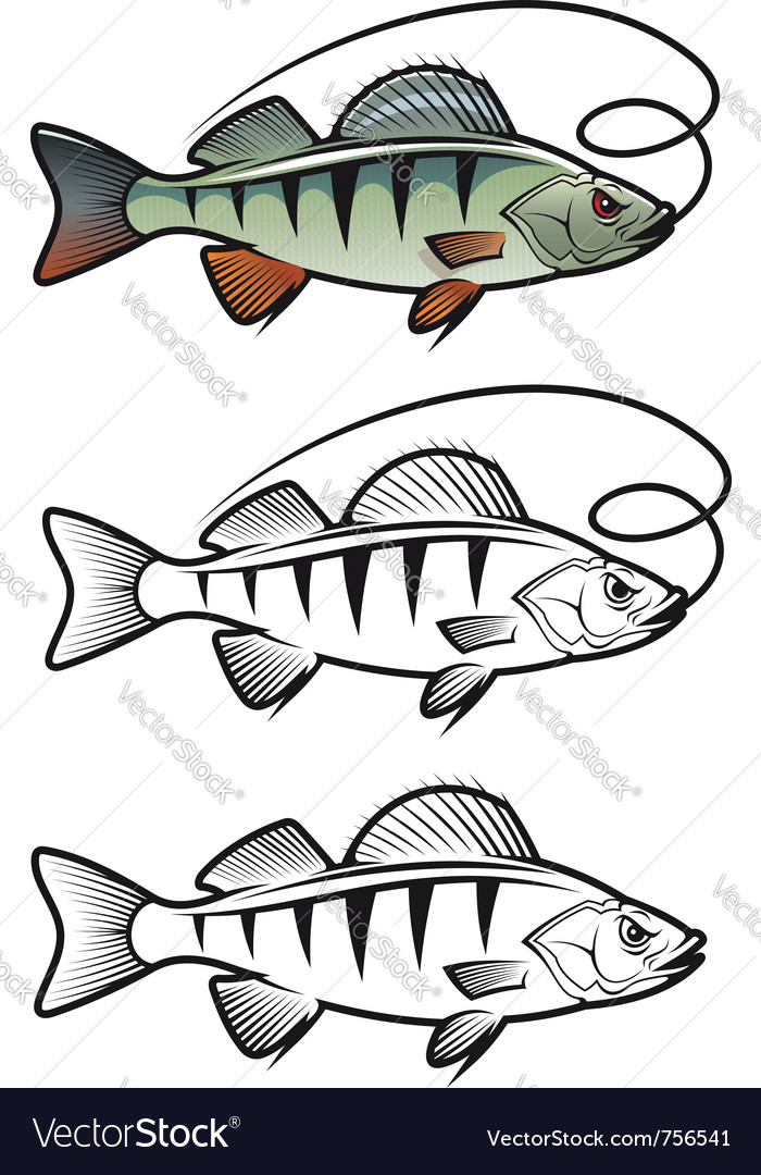 Perch fish vector | Price: 1 Credit (USD $1)