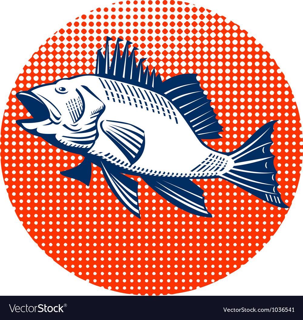 Sea bass retro vector | Price: 1 Credit (USD $1)
