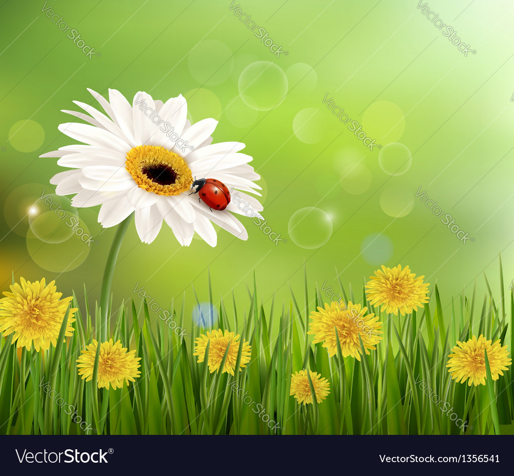 Summer nature background with ladybug on white vector | Price: 3 Credit (USD $3)