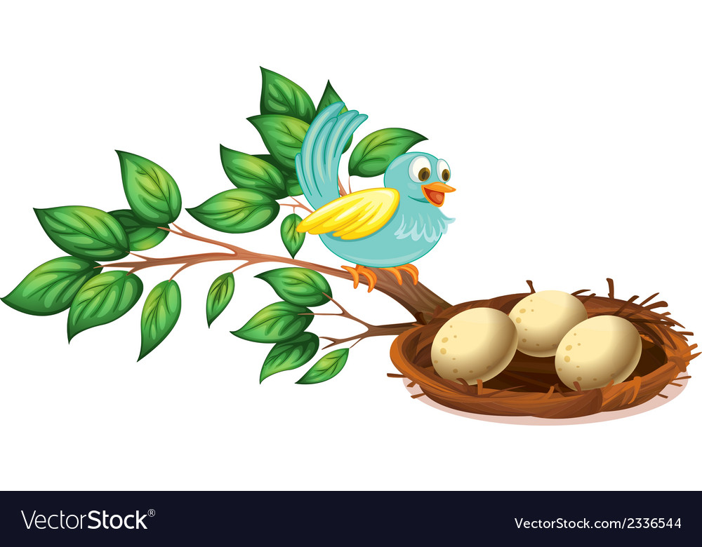 A blue bird watching the eggs in the nest vector | Price: 1 Credit (USD $1)