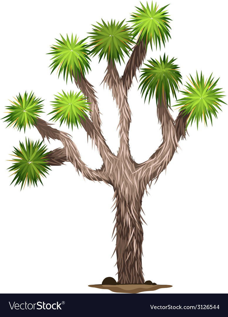 The yucca brevifolia tree vector | Price: 1 Credit (USD $1)