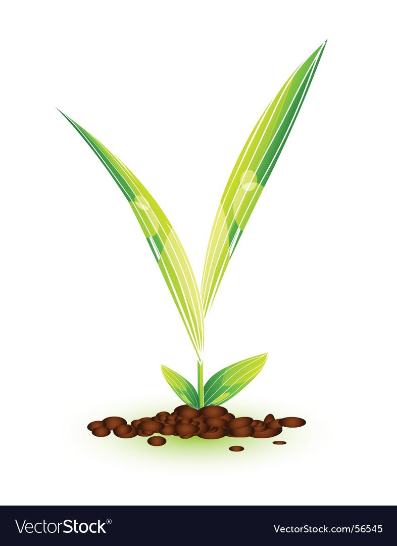 Plant vector   Price: 1 Credit (USD $1)