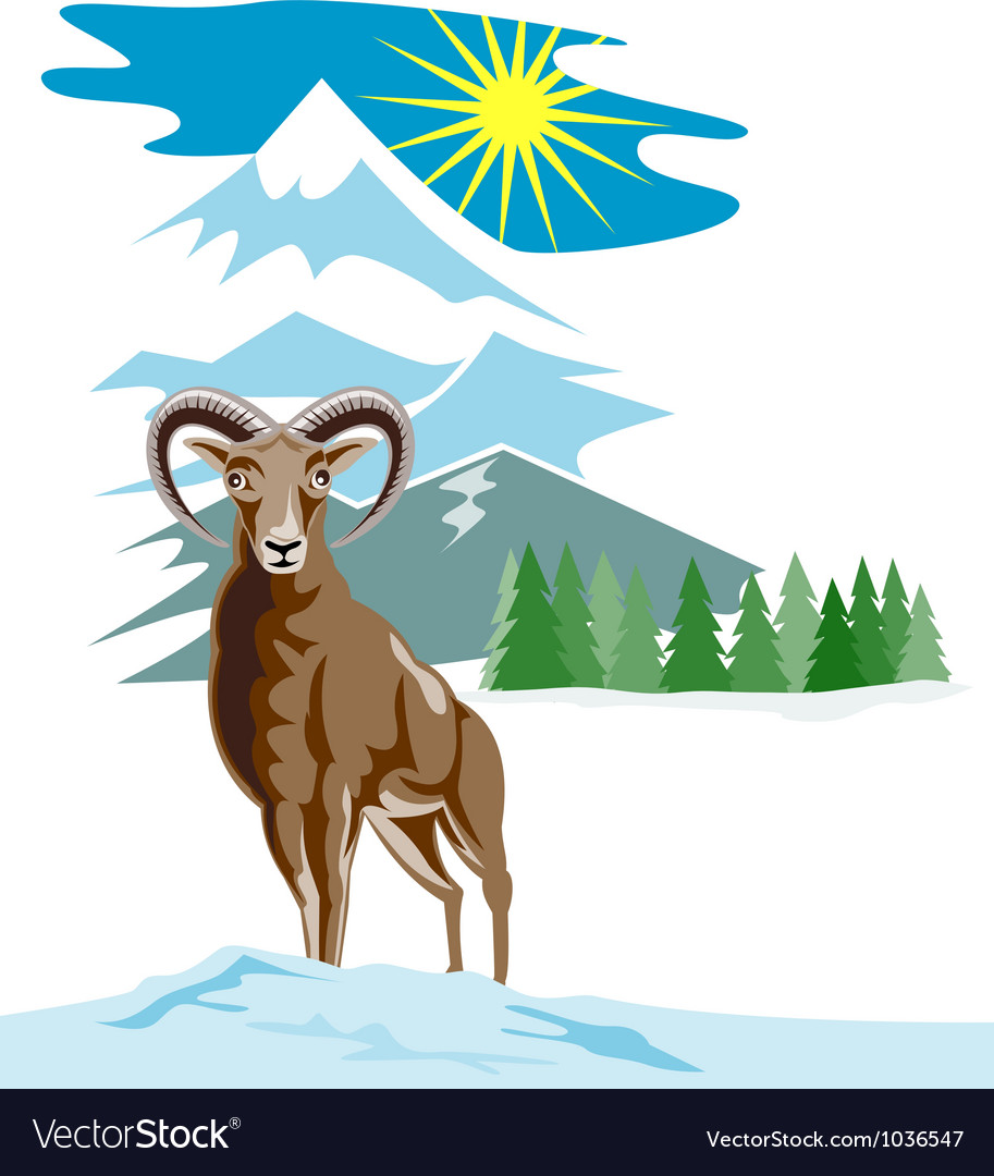 Mouflon sheep mountain goat vector | Price: 1 Credit (USD $1)