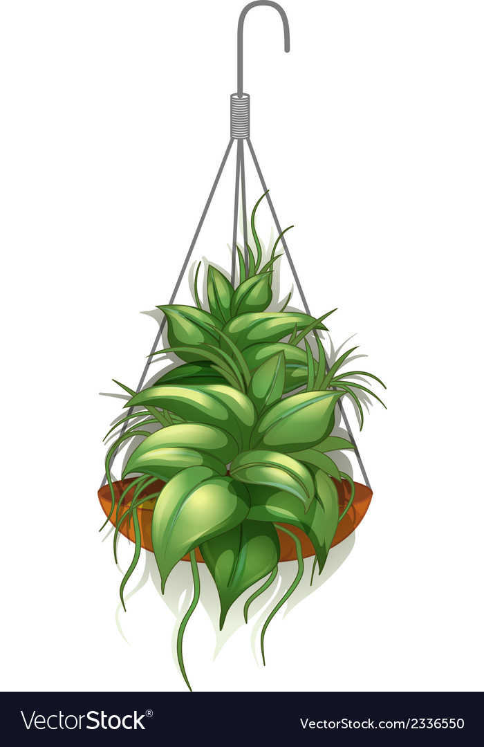 A hanging pot with a green plant vector | Price: 1 Credit (USD $1)
