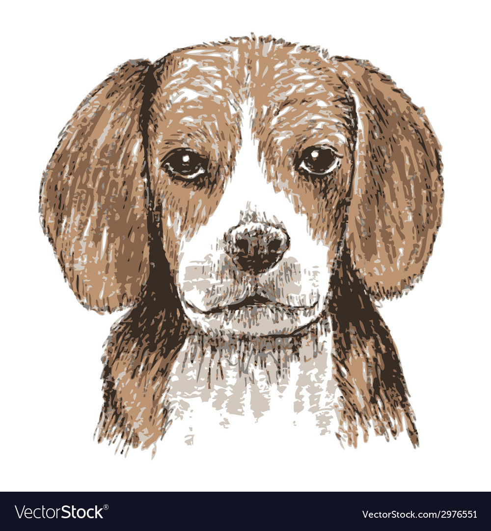 Beagle head vector | Price: 1 Credit (USD $1)