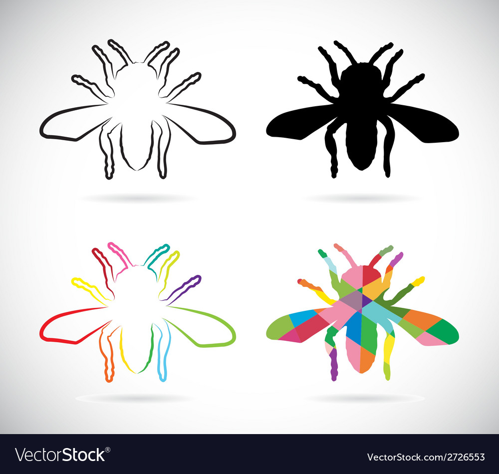 Image of an insects vector | Price: 1 Credit (USD $1)