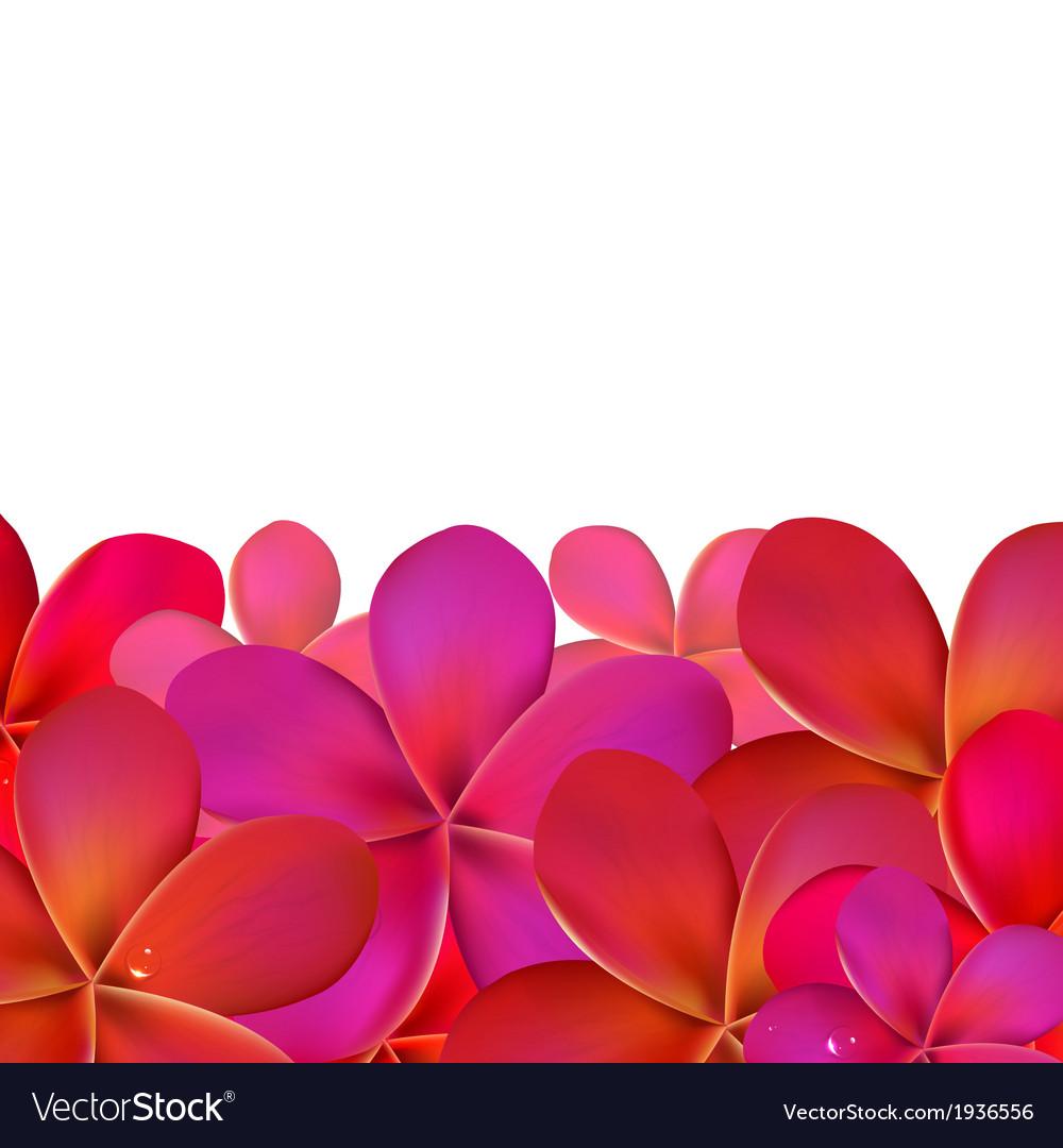 Pink frangipani with border vector | Price: 1 Credit (USD $1)