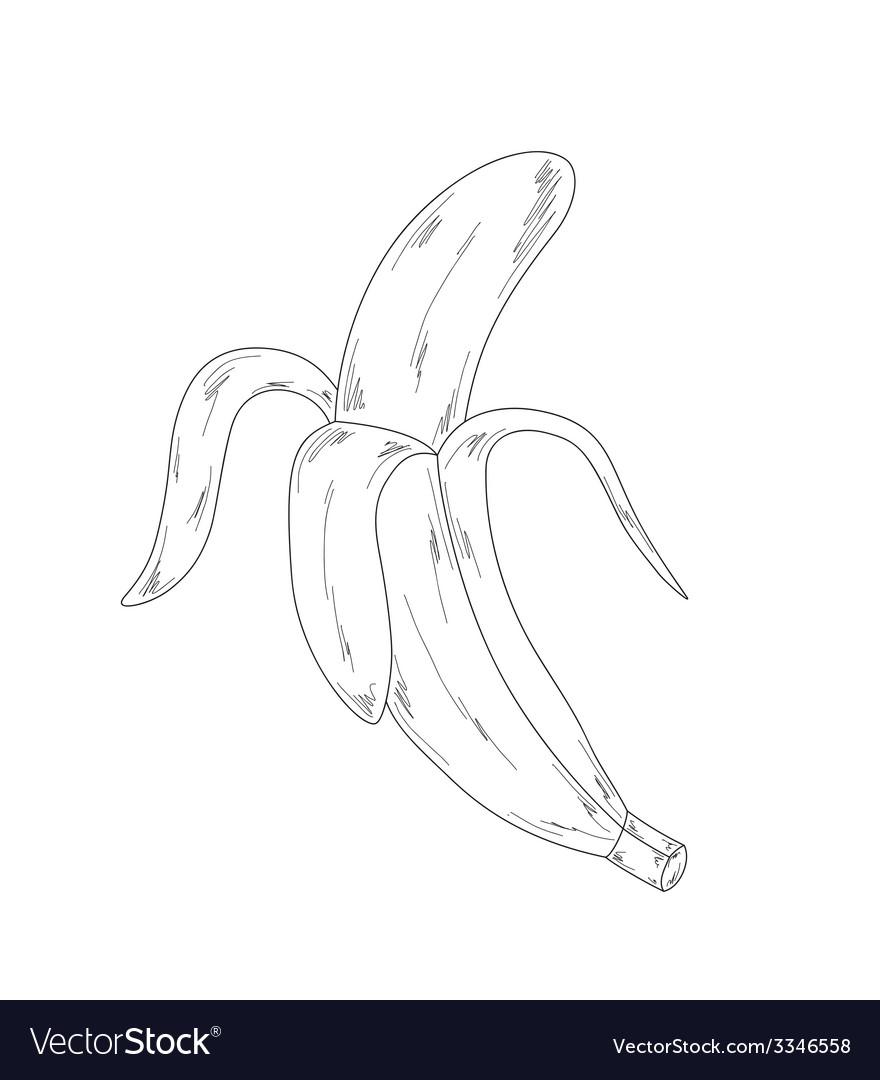 Banana sketch vector | Price: 1 Credit (USD $1)