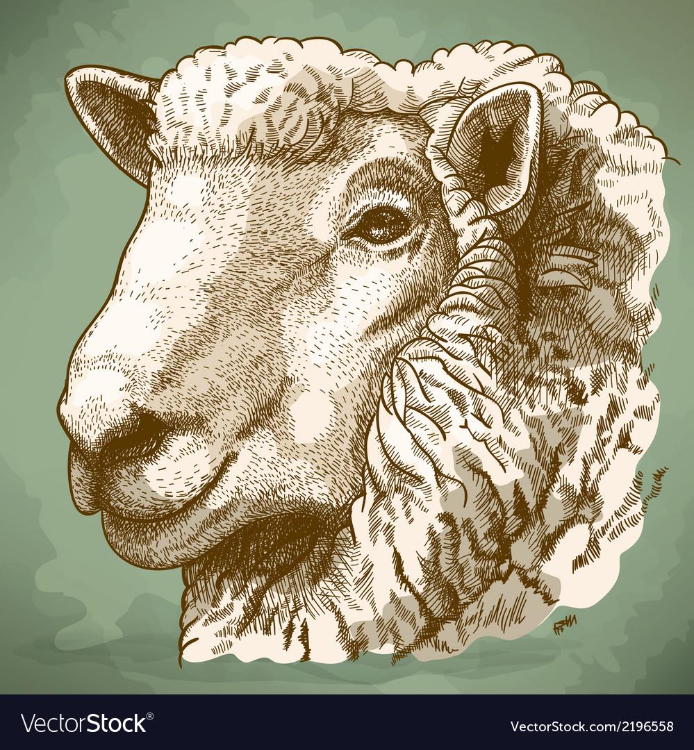 Engraving head of sheep retro vector | Price: 1 Credit (USD $1)