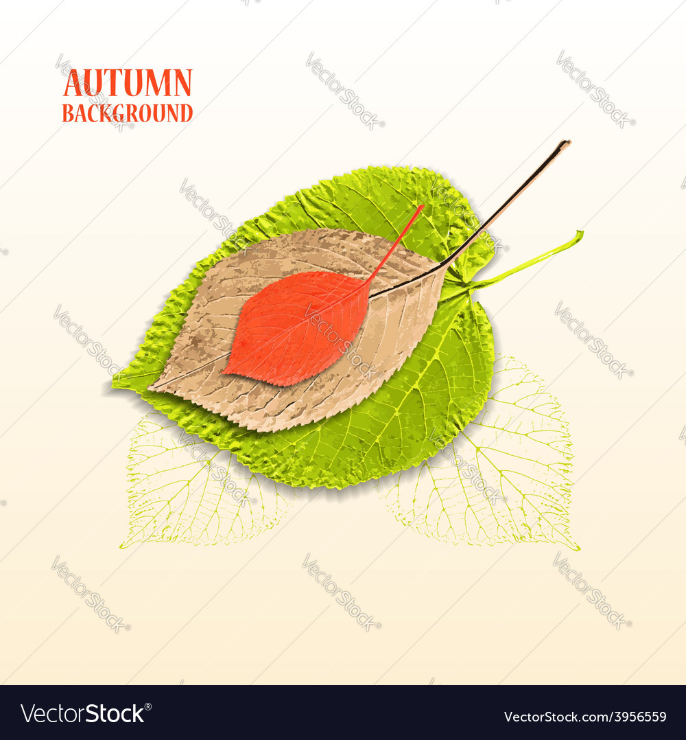 Autumn background with leaves linden and cherry vector | Price: 1 Credit (USD $1)