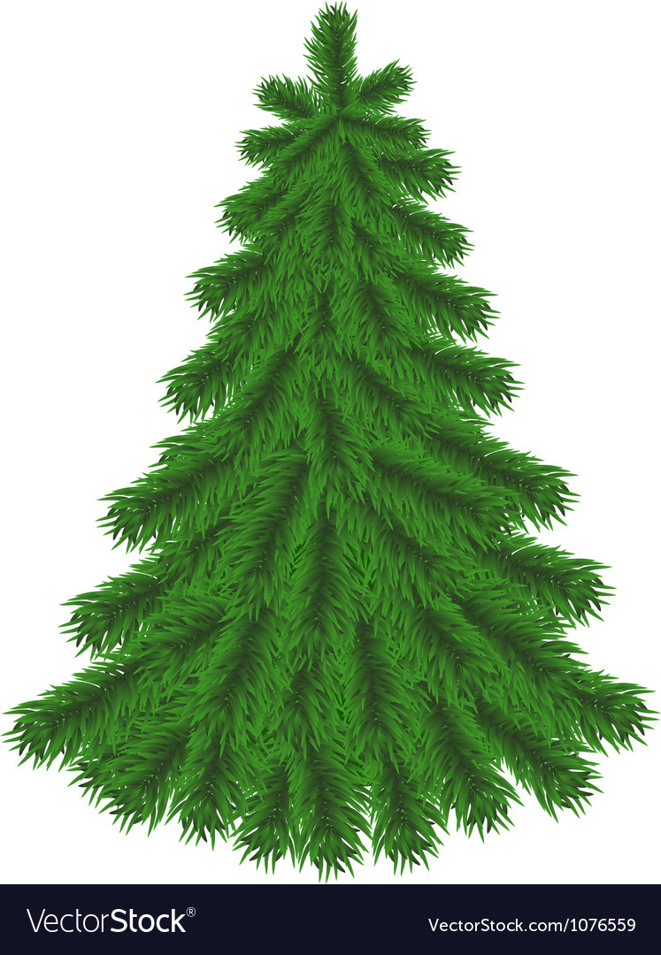 Fir tree without christmas decorations vector | Price: 1 Credit (USD $1)