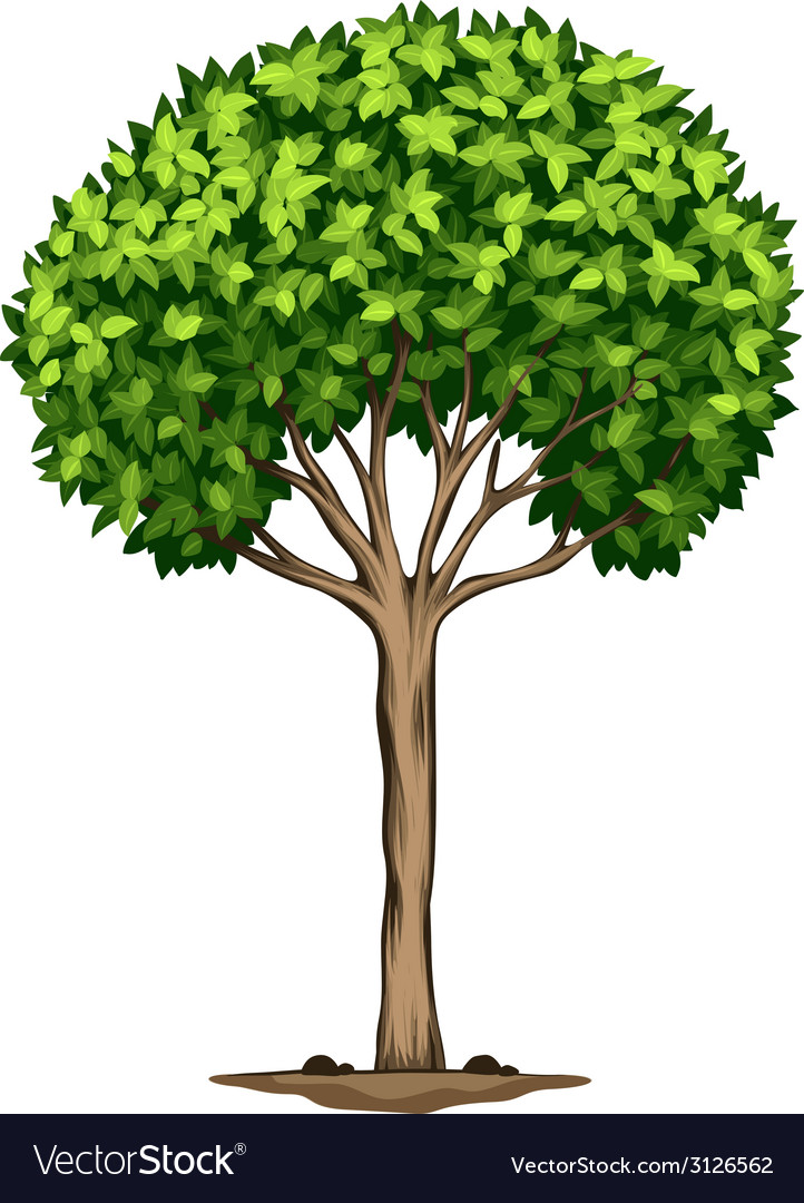 A laurus nobilis tree vector | Price: 1 Credit (USD $1)