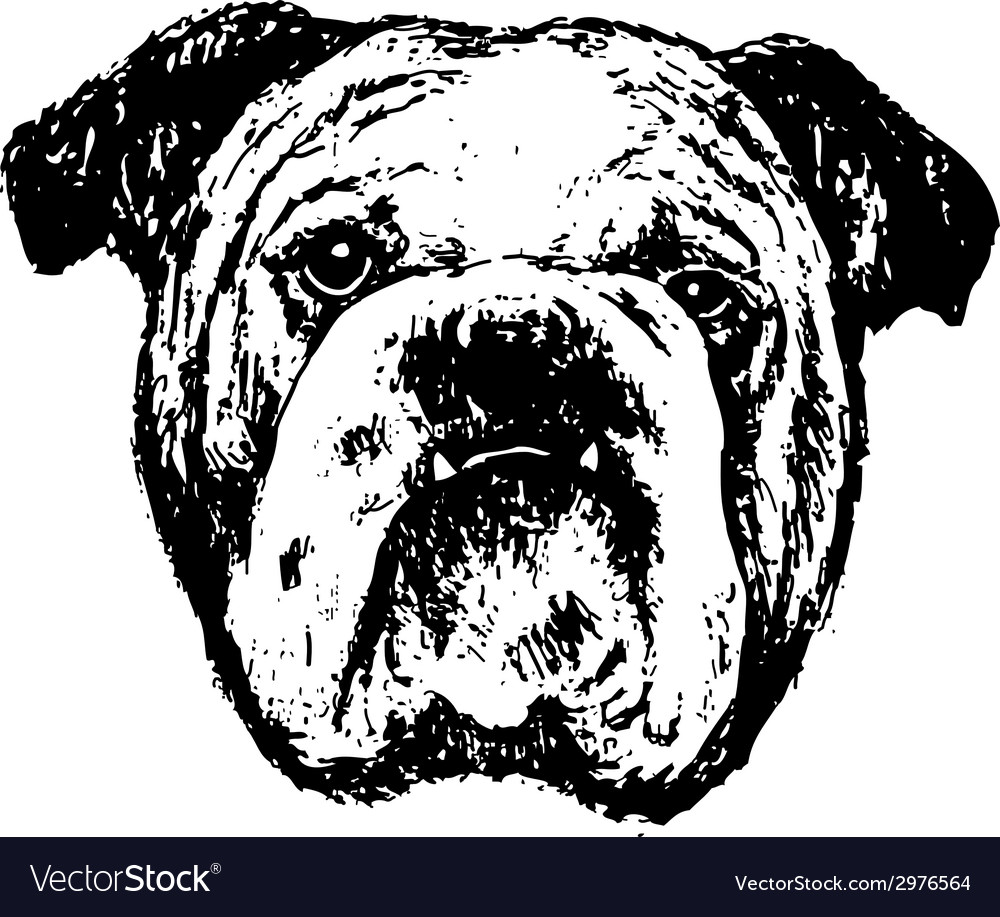 Bulldog head bw vector | Price: 1 Credit (USD $1)