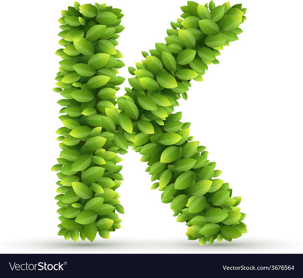 Letter k alphabet of green leaves vector