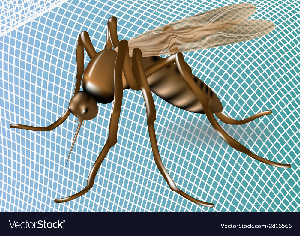 Mosquito net and mosquito vector | Price: 1 Credit (USD $1)
