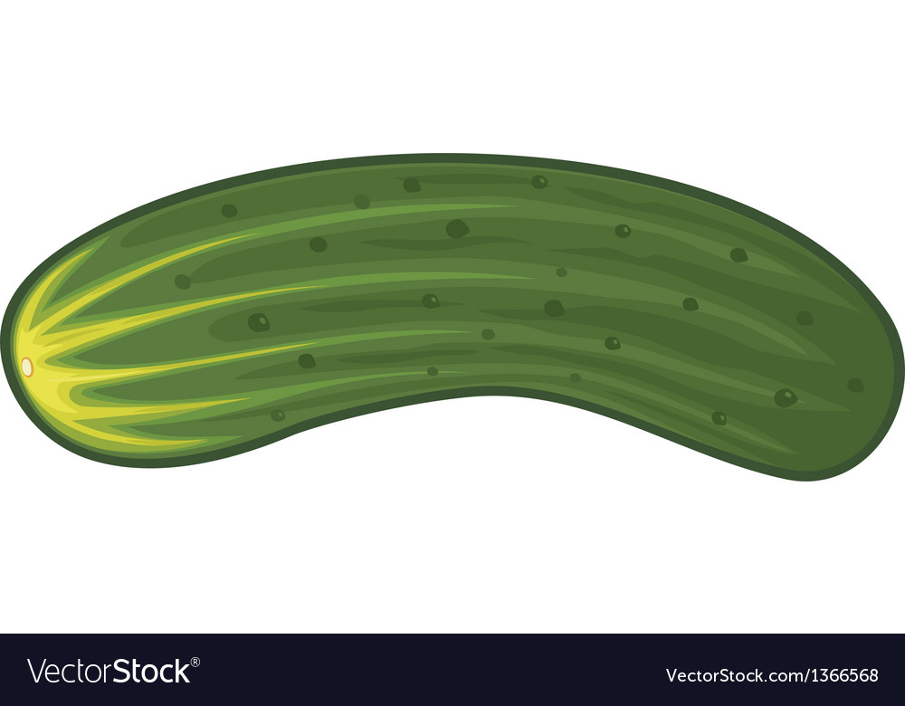 Cucumber vector | Price: 1 Credit (USD $1)