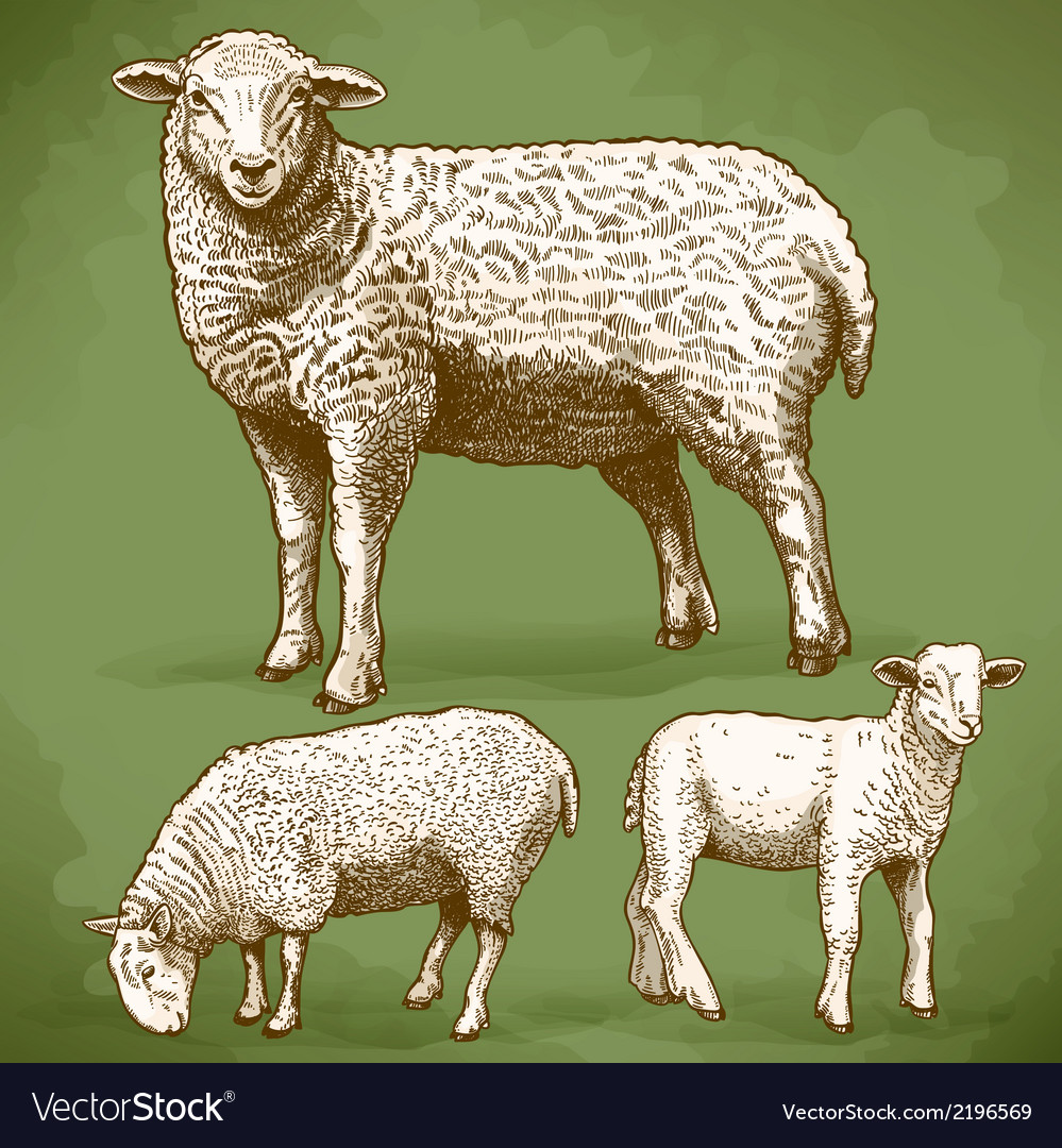 Engraving sheeps retro vector | Price: 1 Credit (USD $1)