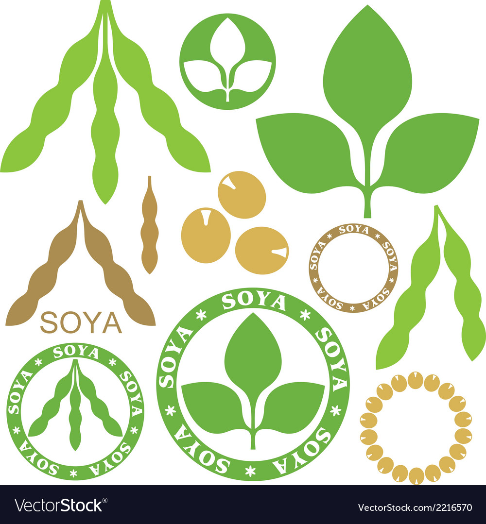Soybean vector | Price: 1 Credit (USD $1)