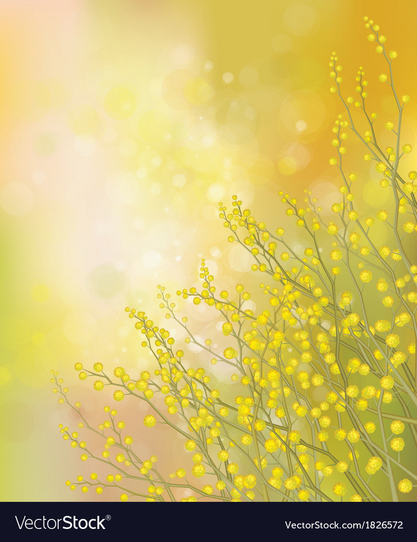 Mimosa background vector | Price: 1 Credit (USD $1)