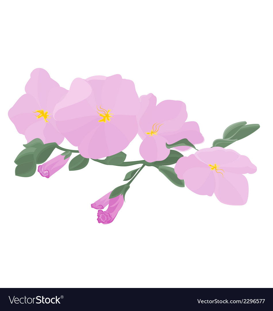 Orchid stem with flowers vector | Price: 1 Credit (USD $1)