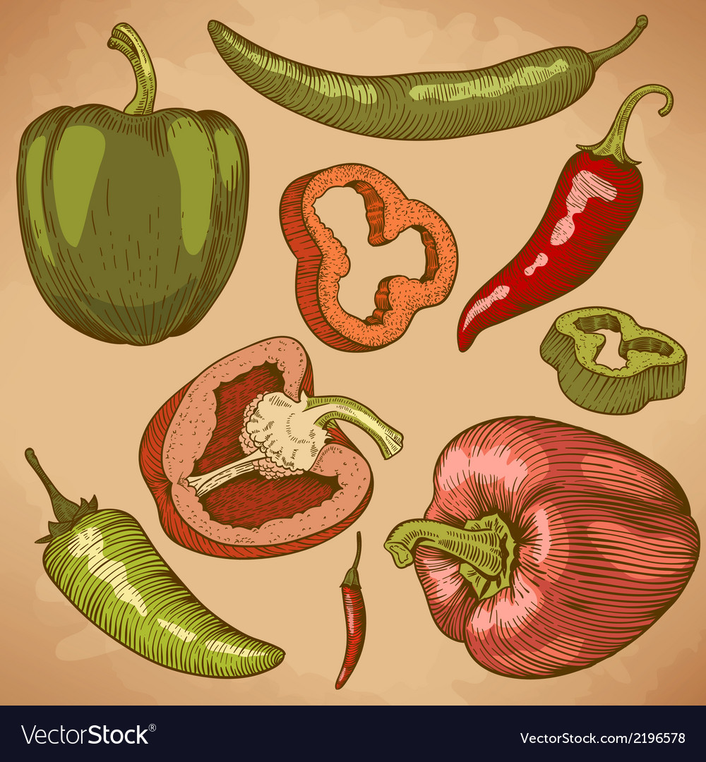 Engraving peppers retro vector | Price: 1 Credit (USD $1)
