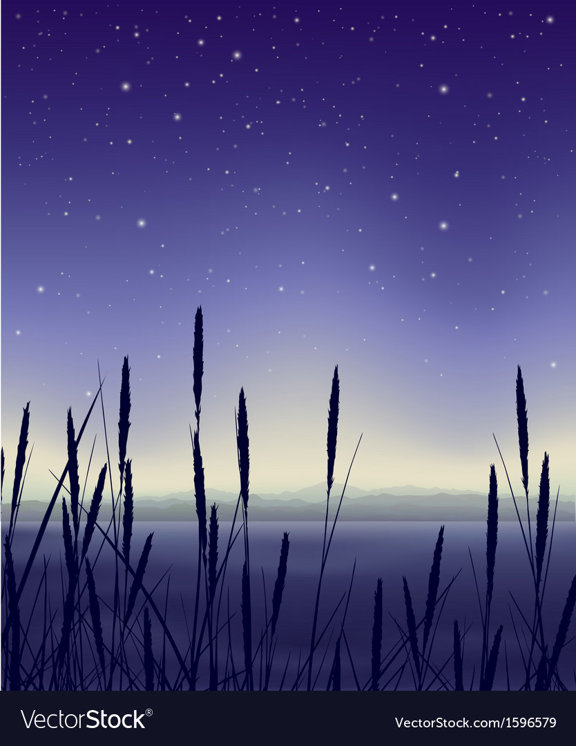 Starry night landscape with reeds vector | Price: 1 Credit (USD $1)