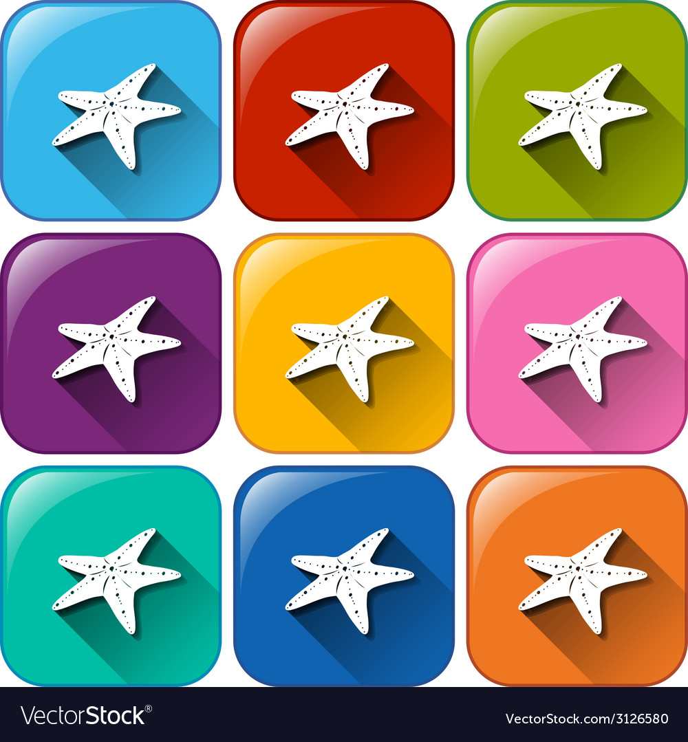 Buttons with starfishes vector | Price: 1 Credit (USD $1)