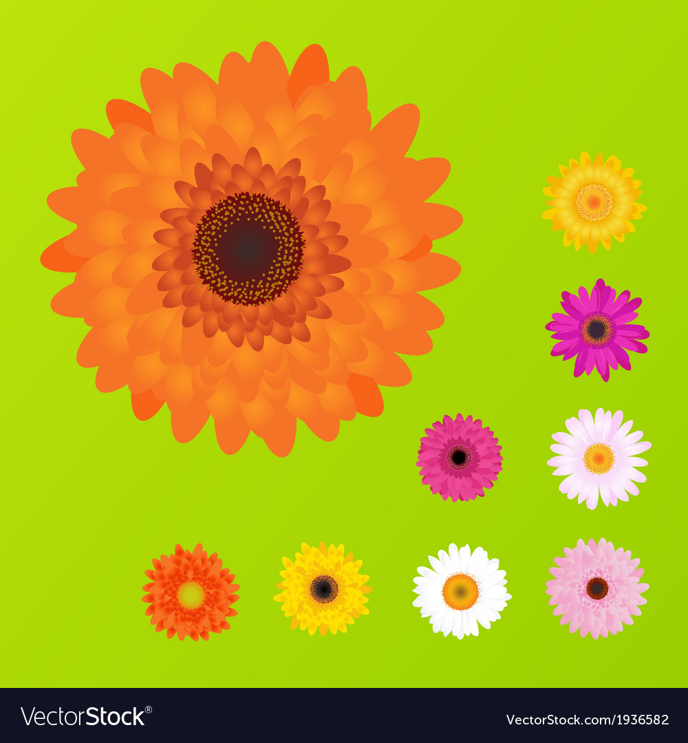 Colourful daisies vector | Price: 1 Credit (USD $1)