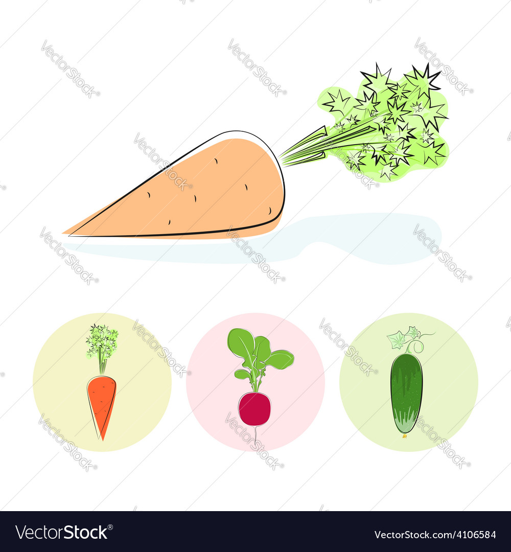 Icons carrot cucumber radish vector | Price: 1 Credit (USD $1)