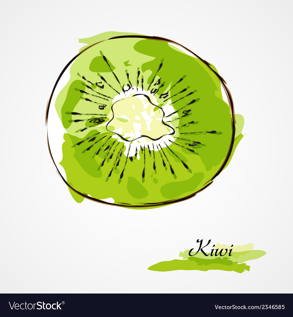 Kiwi fruit slice vector | Price: 1 Credit (USD $1)