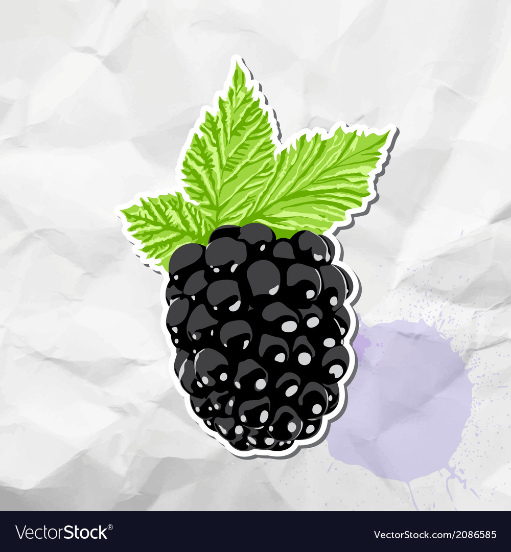 Ripe blackberry vector | Price: 1 Credit (USD $1)