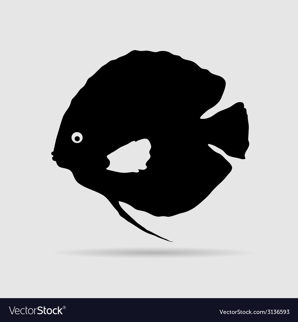 Discus fish vector | Price: 1 Credit (USD $1)