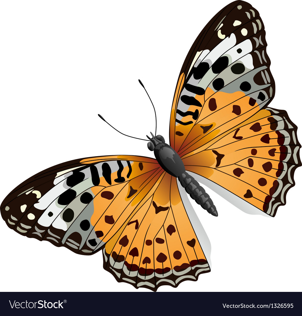 Some orange butterfly vector | Price: 1 Credit (USD $1)