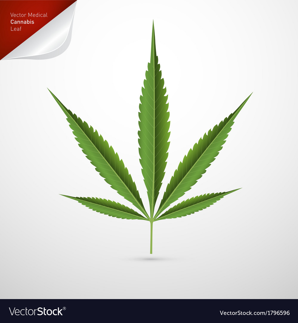 Medical cannabis leaf isolated on white background vector | Price: 1 Credit (USD $1)