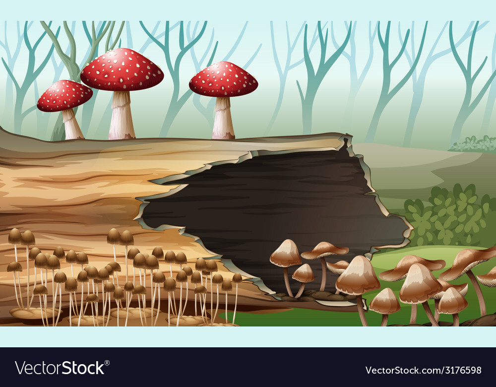 A wood with mushrooms vector | Price: 1 Credit (USD $1)