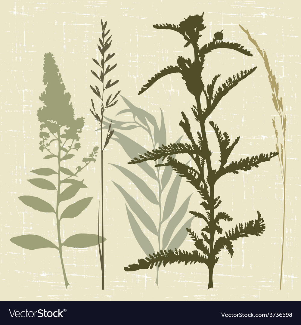 Field grass vector | Price: 1 Credit (USD $1)