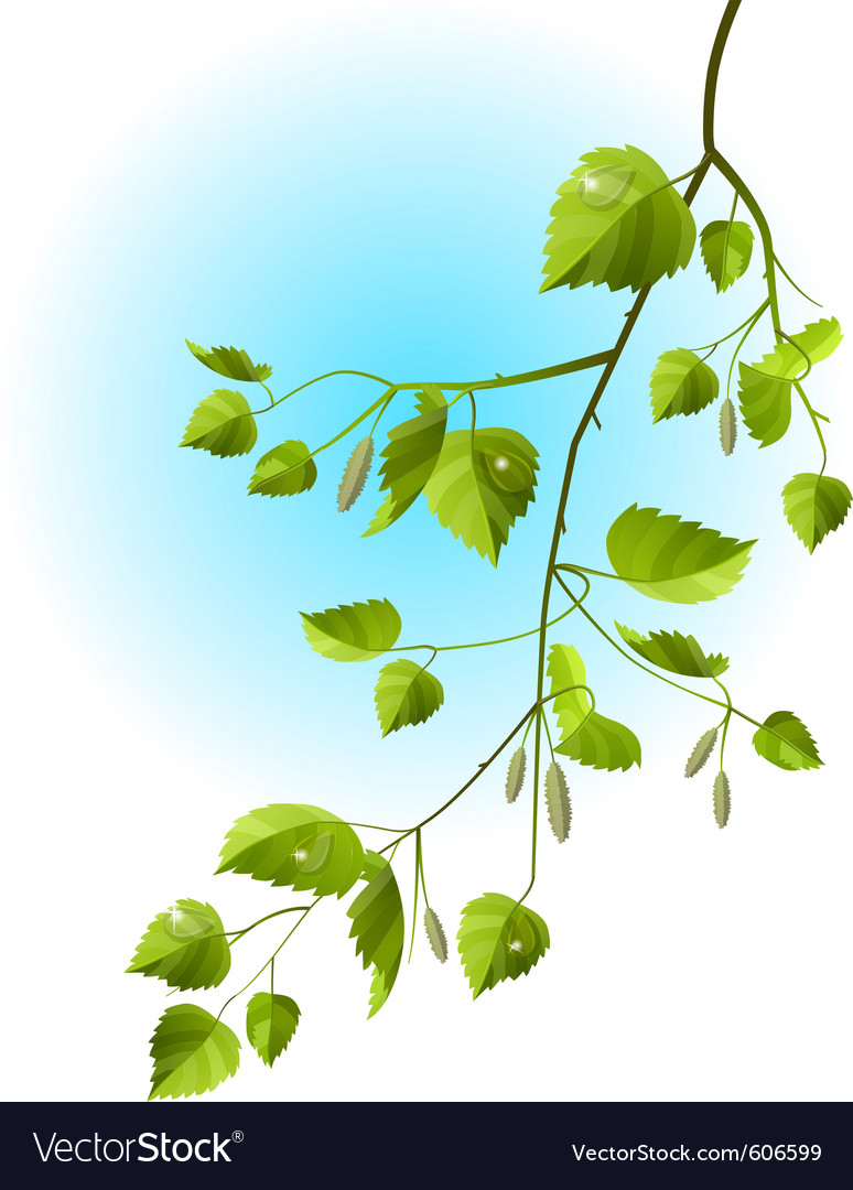 Realistic branch of birch vector | Price: 1 Credit (USD $1)