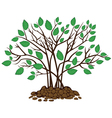 Bush with leaves in the soil vector